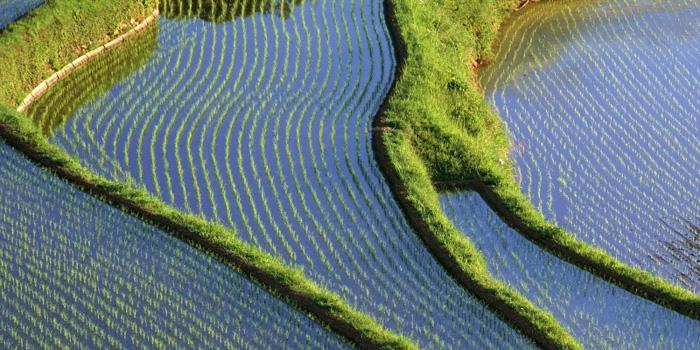 Ekologiškas Tailandas