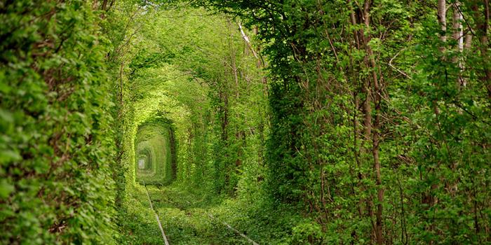 Meilės tunelis Ukrainos miškuose