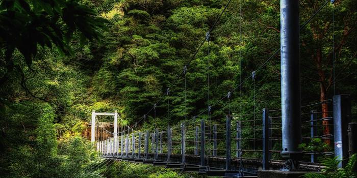 Miškai Jakusima saloje