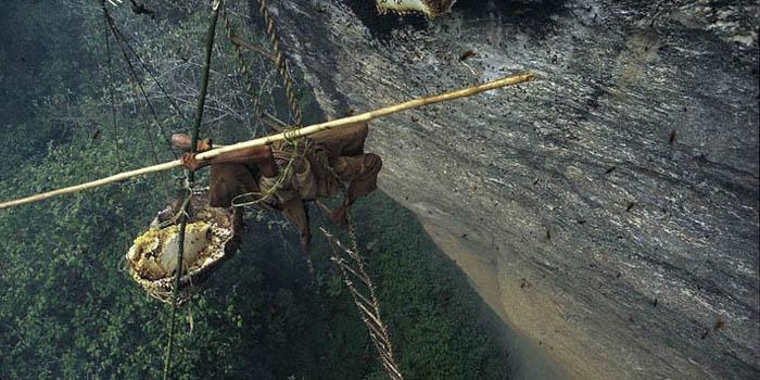 Medaus surinkėjas. Nepalas.