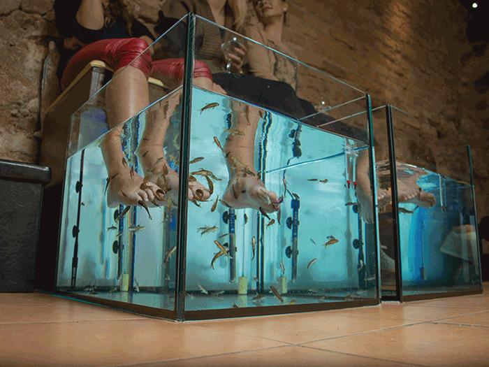 Fish SPA - Viešbučiai Vilniuje